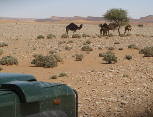 Marokko self drive